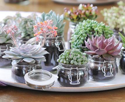 Deko mit Sukkulenten muss nicht aufwändig sein und lässt sich leicht selber machen. Hier dienen formschöne Einmachgläser als Pflanztopf. Foto: Blumenbüro Holland