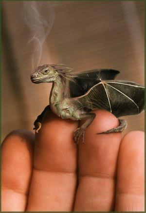 uh dragón loco por smokeyeyedgirl