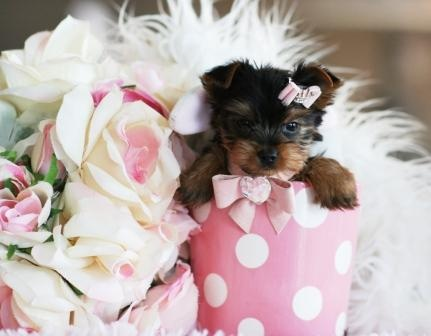 Please someone give me a puppy like this!!!