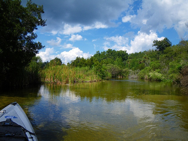 Juniper Creek, in Ocala National Forest, is an example of the pristine  natural areas in Marion County, Florida.