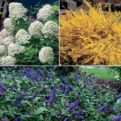 hearty dwarf shrub collection three low maintenance full to partial sun - Flower Garden Ideas Partial Sun