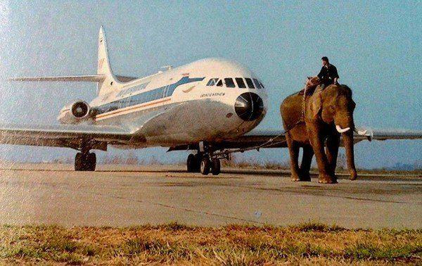 Слон тянет Sud Aviation Caravelle авиакомпании Thai Airlines. Тайланд, 1970ые гг.