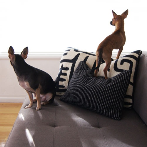 Morgan Satterfield of The Brick House and her pups Iggy, and BowiePets Portraits, Scoop Columns, Colors, House Pup, Nice Couch, Charcoal Couch, Bricks House, Pup Iggy, Morgan Satterfield