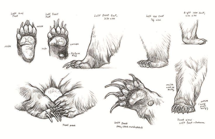 Art of Animation : suckmycockatoo: Fantastic reference for bears! ...
