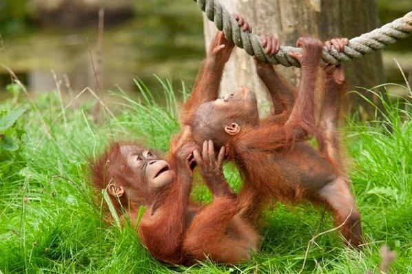 Los rondlopen tussen de apen? Dat kan in de Apenheul. Laat je verrassen door de eigenaardigheden van alle apensoorten.