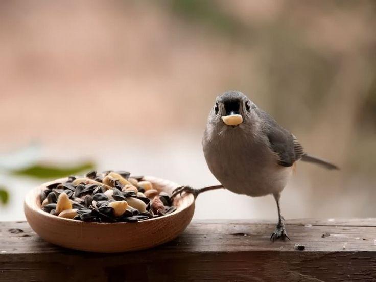 Картинки птицы кушают
