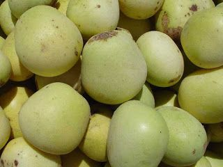 Marula Fruit pictures