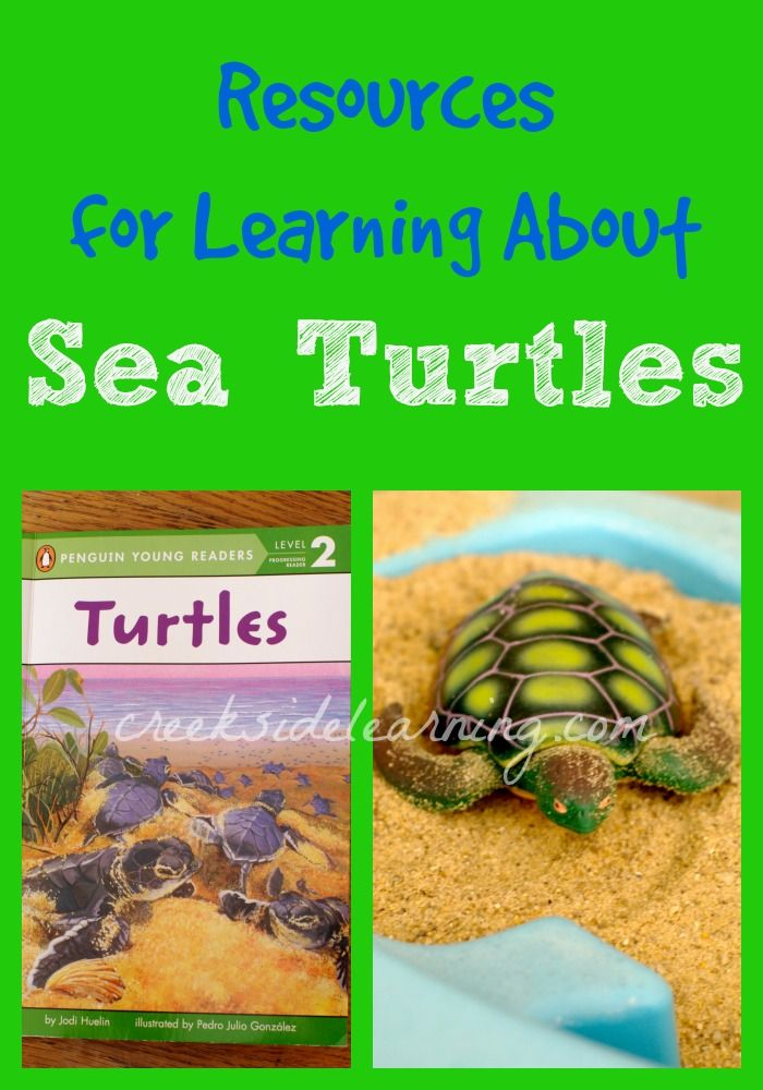 Sea Turtle Facts For Kids, sea turtle unit study, learn about sea turtles for summer science