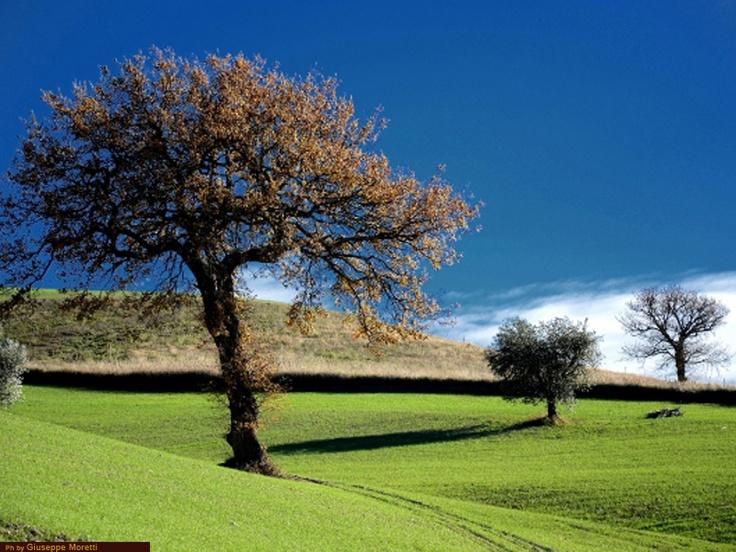 Guida turistica delle marche: provincia di Macerata, country landscape, italy, travel, nature