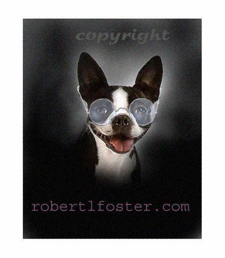 Portrait de Boston terrier chien art print art boston terrier de ma peinture 8 x 10
