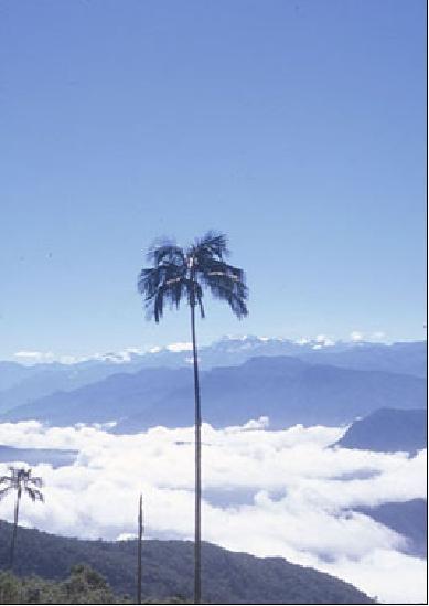 SIERRA NEVADA DE SANTA MARTA. COLOMBIA