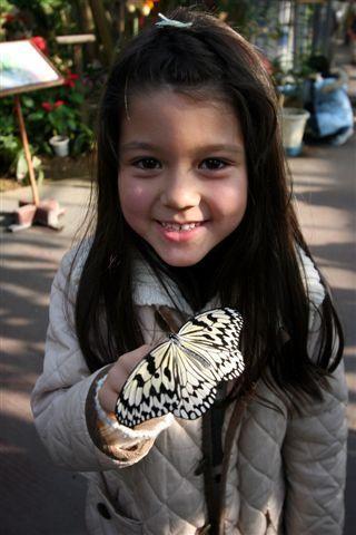 Okinawa butterfly park - Pixdaus