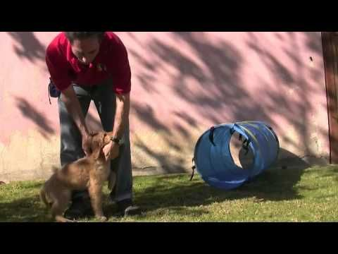 If Your Dog Keeps Running Away, Try These Tips - Petful ...
