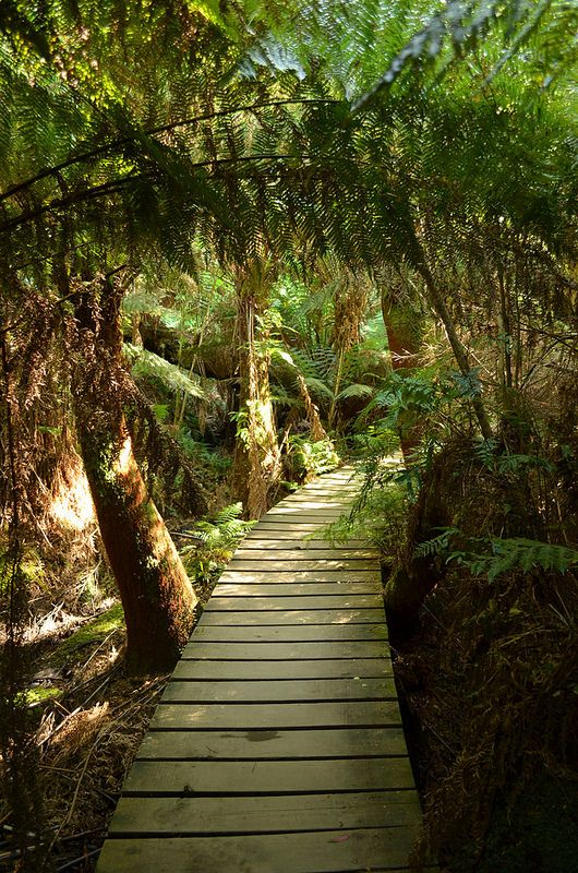 Mait's Rest rainforest trail, Otway National Park, Australia- near Apollo Bay