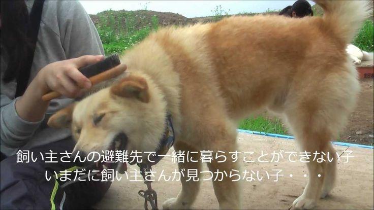 犬と人が心を通わす地~(社)SORA 福島被災動物レスキュー
