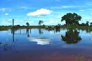 Pantanal - nesse domínio é possível identificar várias coberturas vegetais, é uma área de transição entre diferentes tipos de ecossistemas apresentados no território brasileiro. Diante da heterogeneidade do Pantanal quanto à cobertura vegetal, podemos destacar a presença de campos que periodicamente permanecem inundados no período chuvoso, além de floresta tropical e equatorial. Esse domínio ocorre nos estados de Mato Grosso e Mato Grosso do Sul. O Pantanal é conhecido como um refúgio…