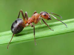 Jak se zbavit mravenců bez chemie. Rady našich babiček a tipy čtenářek.