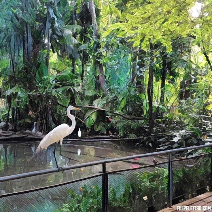 Garça  Museu Emilio Goeldi #belemdopara #belem #brazil #museuemiliogoeldi #amazon #rainforest #green #forest #filipeleitao #tree #trees #heron #nature #naturephotography #prisma #prisma_vibe #prisma_app