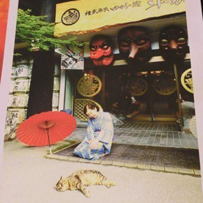 トラヒゲ(湯西川温泉 桓武平氏ゆかりの宿 平家の庄)全国の宿・ホテルの看板猫
