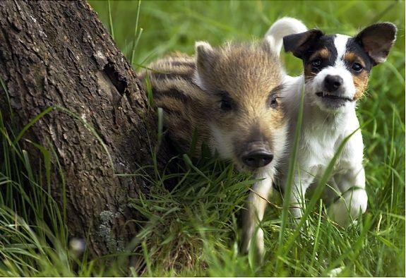 Belles amitiés entre animaux