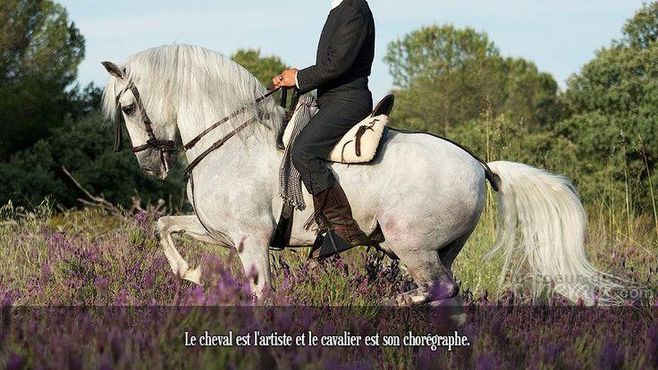 Le cheval est l'artiste et le cavalier est son chorégraphe.