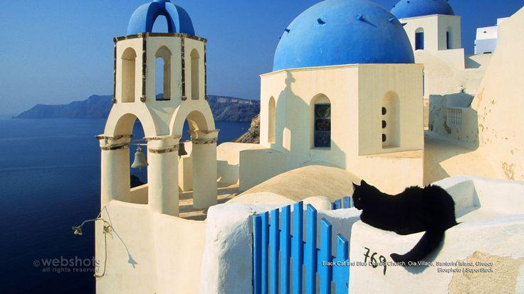 Black Cat And Blue Domed Church Oia Village Santorini Island Greece Europe Pinterest