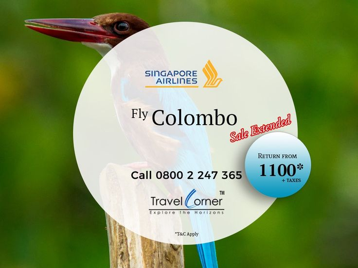 Best Airfare by Singapore Airlines is available Now! Plan your trip to Colombo Now! Call 0800 2 247 365 or Travel Dates: 16 Jan 18 to 31 Oct 18 Sales Expire on 29 Nov 17 #TravelCorner #SingaporeAirlines #SpecialOffer #Colombo #Srilanka Terms and Conditions Apply
