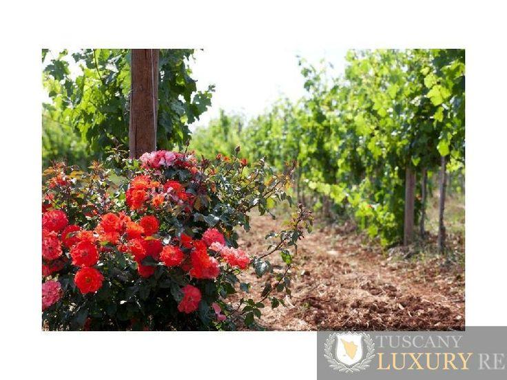 Farm winery for sale in the countryside of Salento, Puglia (ref158)