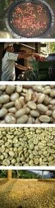 COFFEE PROCESS  - Coffee hand picking  - Coffee Pulp – Natural Process  - Coffee Washed / Wet / Process  - Coffee's Natural Dry Process / Honey  - Milling