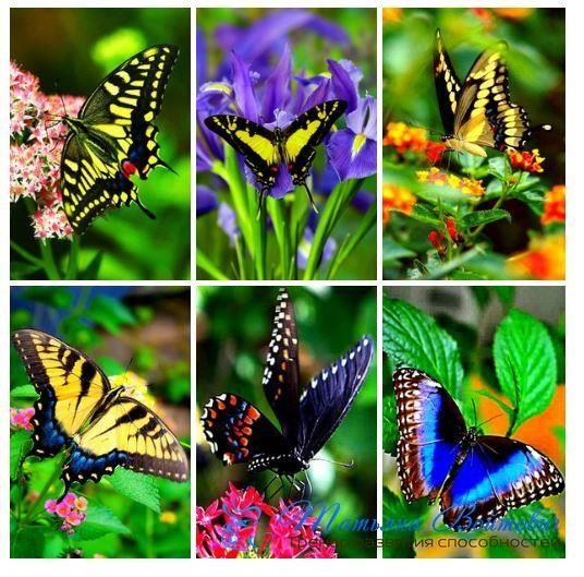 ✨Живите в гармонии. Гармония приходит изнутри. Не ищите ее снаружи. Не ищите снаружи то, что может быть только в вашем сердце. 💐  Часто мы можем искать снаружи, только чтобы отвлечь себя от правдивой реальности. Правда в том, что гармонию можно найти только внутри себя.🌷   Гармония – это не новая работа, не новая машина или новый брак; гармония — это мир в душе, и он начинаются с вас.🌻  #татьяна_войтович #индивидуальные_консультации #мотивация #потенциал #позитивные_настрои…