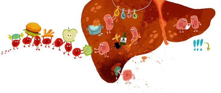 Функции иммунитета. Слабая печень.