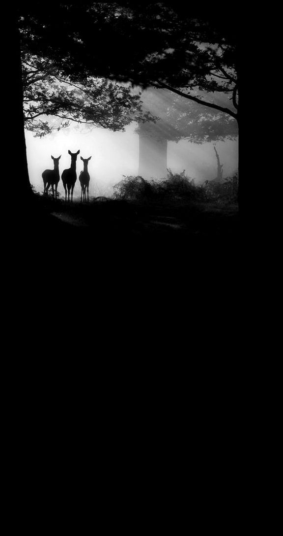 ☾ Midnight Dreams ☽  dreamy & dramatic black and white photography - three deer at night