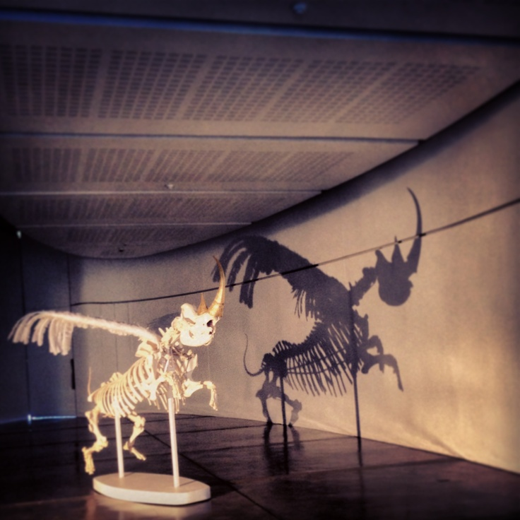 powerful exhibition on the current situation of RSA rhino's #cricagallery #rhino #jhbexplored