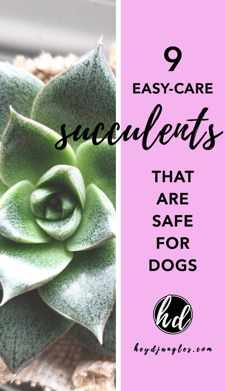 Pictures Of Succulents Poisonous To Dogs