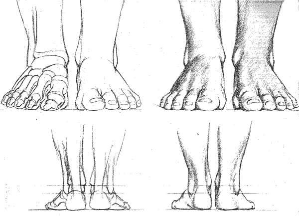 Dessin De Pied Humain comment dessiner des pieds | références, silhouettes,canons et poses