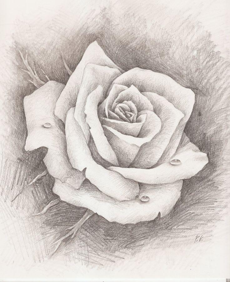 pencil drawn rose - Google Search | Pencil Art | Pinterest ...