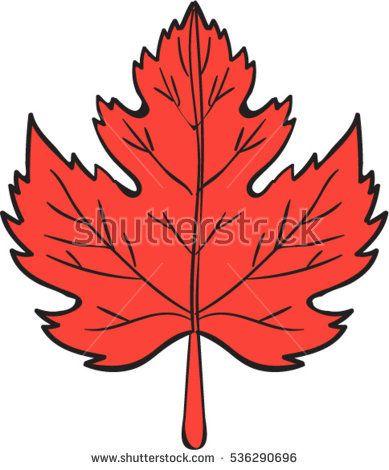 Drawing sketch style illustration of a maple leaf set on isolated white background.  #mapleleaf #sketch #illustration