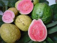 Goyave fruit des Antilles...slurp!