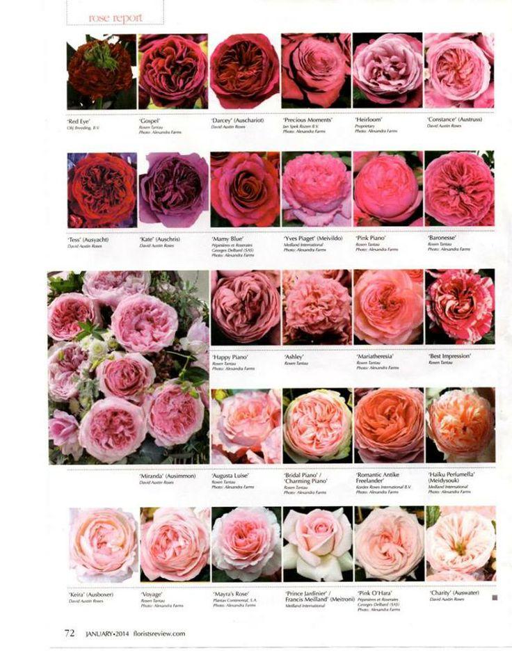 Flower Allie Garden Rose Chart 1 Nazvaniya Cvetov Cvety