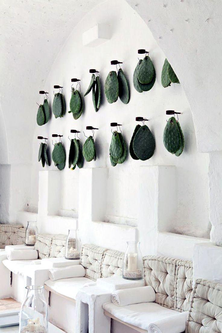 Cactus leafs