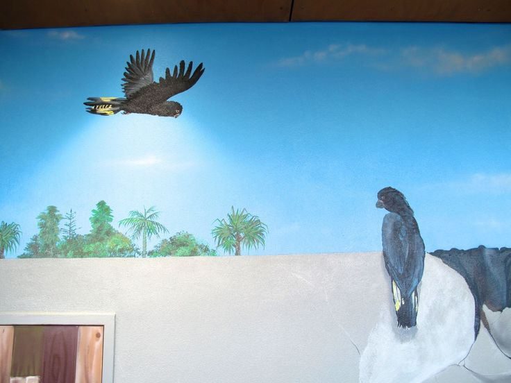 Cabarita Community Noticeboard - Blog - Aerograffix - Quality artwork handcrafted by artist Sauce  #Blog #aerosolart #mural #fauna #Blackcockatoo #illusion #northernnsw #northernrivers