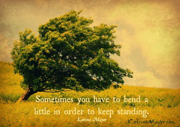 Sometimes You Have To Bend A Little In Order To Keep Standing. Katrina Mayer  · Personality QuotesCounseling ...