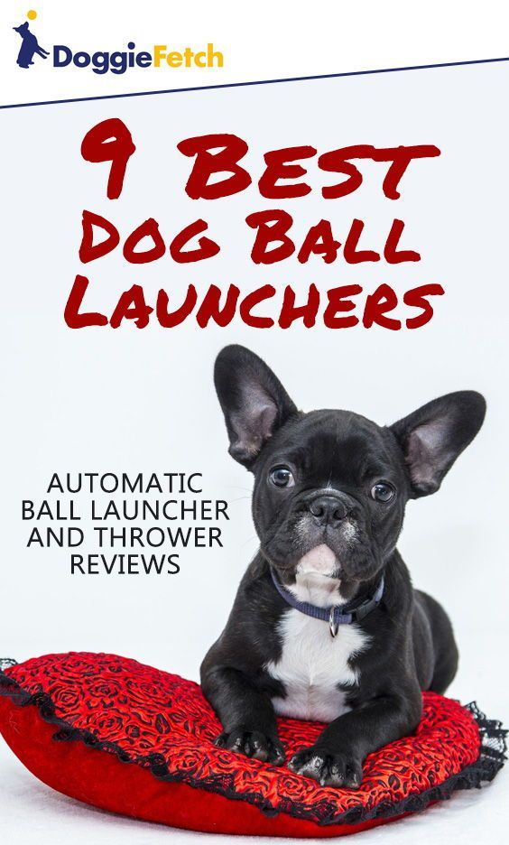 25c4efe2a7492 Can t play  fetch with your  dog  Let one of these do it for you! Click  here to learn more!