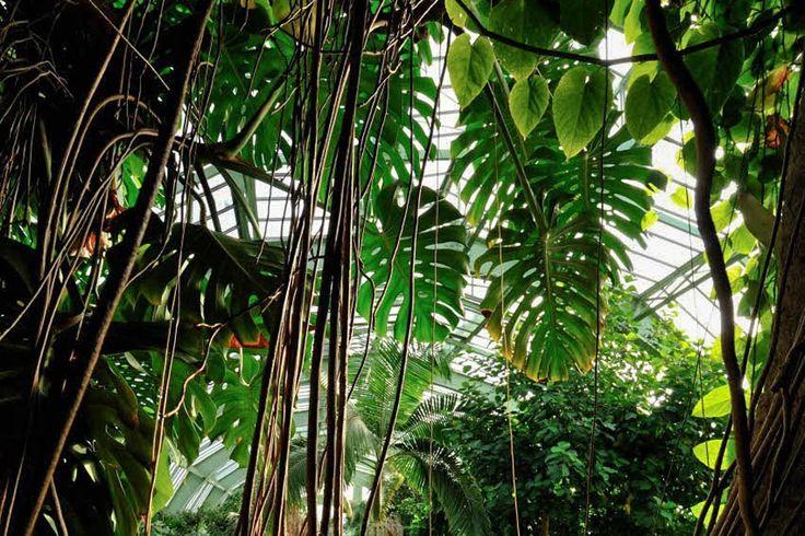 Serre des forêts tropicales humides - Jardin des Plantes © FG Grandin