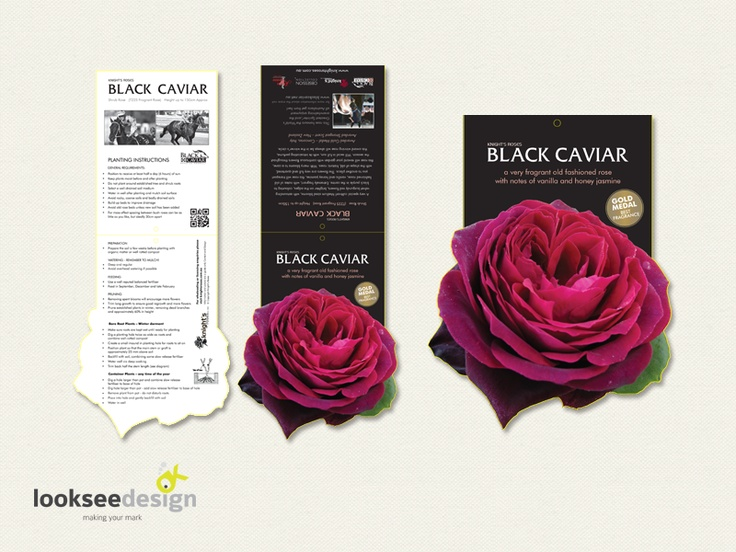 Knight's Roses Black Caviar Rose Label - Designed by Looksee Design