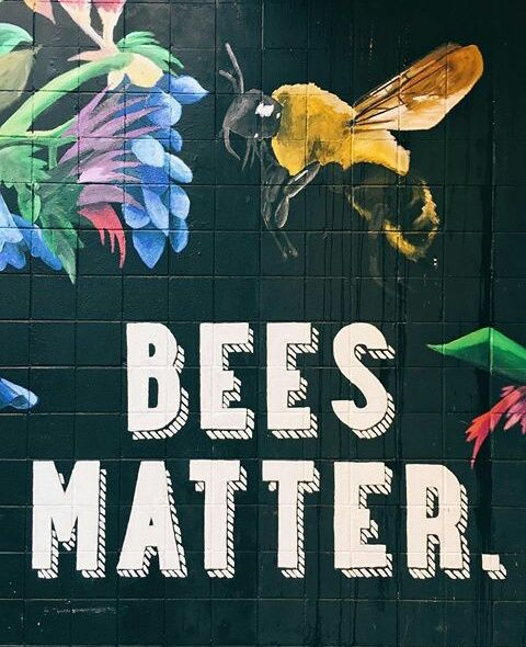 You don't know how much! Do everything you can to encourage bees into your gardens. If you want to learn more, listen to our 7-5-2016 interview/podcast with EnvironmentAmerica.org who took 2 MILLION DEAD BEES to Washington DC to bring attention to the pesticides that are killing them. http://podcasts.kcaastreaming.com/fad/ May have to FF though to get to interview
