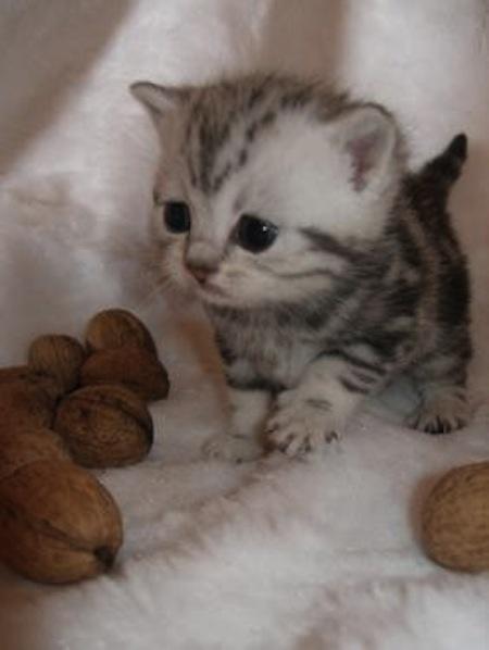 Cuuute http://media-cache5.pinterest.com/upload/23432860531187331_DFF0CN0r_f.jpg christina2487 cute little animals