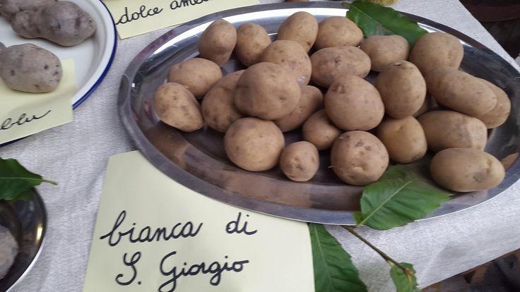 Spirito di patata 😊 tuberi in mostra a Codera ( So )
