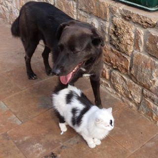 Buffakos with Gazaroula, the best friends #buffakos  #gazaroula #dog #cats #funnypets #instagramdog #instagramcat  #like4like #followforfollow