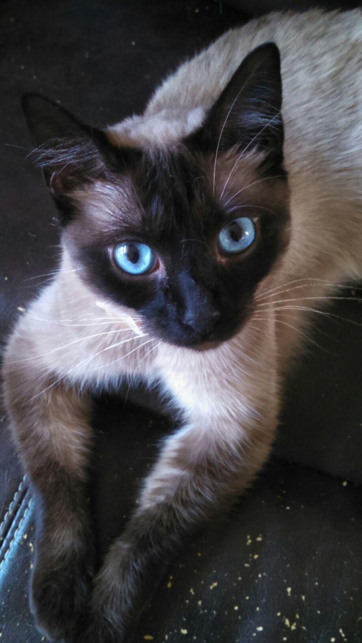 **Reincarnation of Riverheart** Riverheart: Rank: StreamClan Warrior Alive or Dead: Dead thin siamese she-cat with big sky-blue eyes